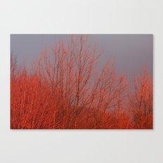 Red Autumn Canvas Print