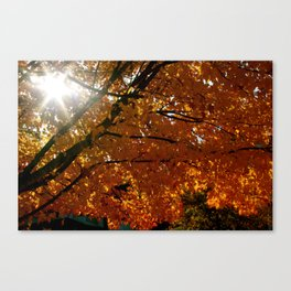 Season On Fire  Canvas Print