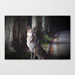 Wolfdog Canvas Print