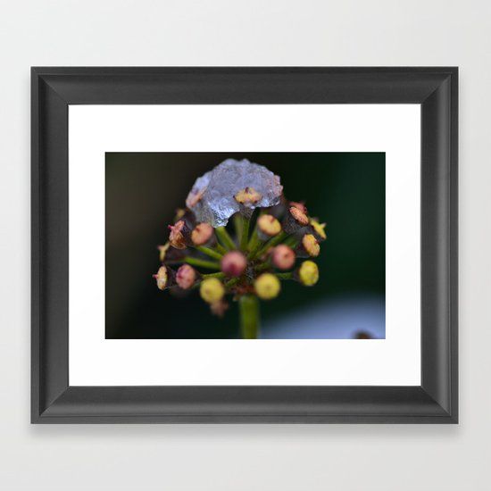 Snow On The Wild Ivy Framed Art Print