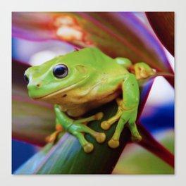 Green Tree Frog Australia Canvas Print