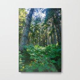 Mossy Heights Metal Print