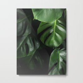 Tropical Monstera Leaves Wet Supple Foliage Dark Dense Forest Metal Print