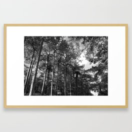 Wood For The Trees Framed Art Print