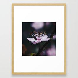 Pink flower 1 Framed Art Print
