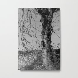 Birdbox Metal Print