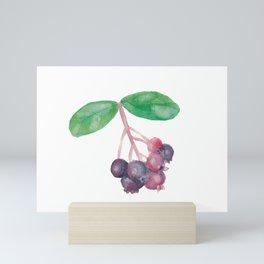 Saskatoon Berries Mini Art Print