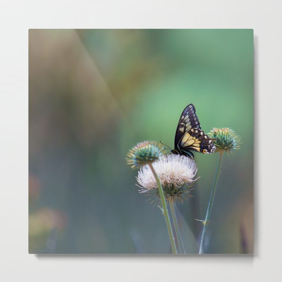 Butterfly Thistle Metal Print