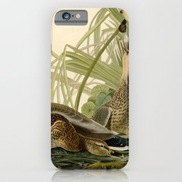Mallard Ducks iPhone Case