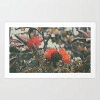Hawaiian Flowers Art Print