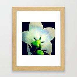 FLOWER 043 Framed Art Print