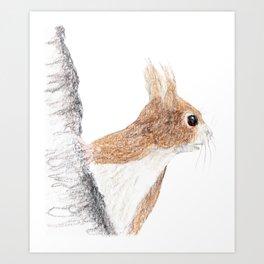 Small Squirrel Art Print