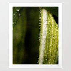 Garden Raindrops Art Print