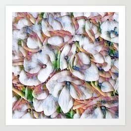 Hydrangea Macro Rainbow Art Print
