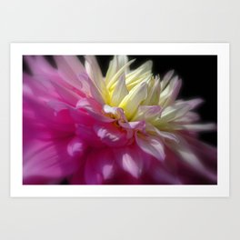 Bright Pink Chrysanthemum Art Print
