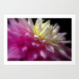 Bright Pink Chrysanthemum Art Print