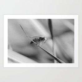 Cicada Hornet Cleaning Himself Art Print