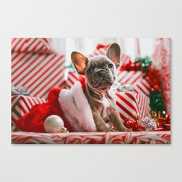 Red & White Christmas Pup (Color) Canvas Print