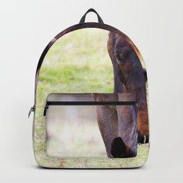 Watercolor Horse 56, Morven Park, Virginia, Sparse Grazing Backpack