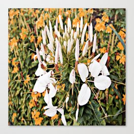 Flower watercolor painting pretty white  Canvas Print