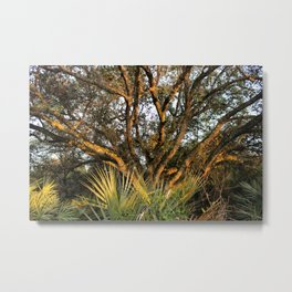 gold trees Metal Print