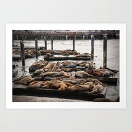 The Sea Lions of Pier 39 in Winter Art Print
