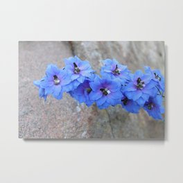 Blue Flowers in Marquette Metal Print