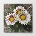 Zany Gazania - red and white stripes by rvjdesigns