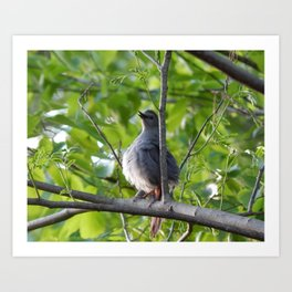A puffy catbird Art Print