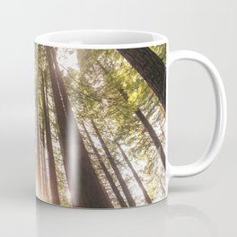 Forest at sunset Coffee Mug