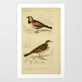 D'Orbigny - Universal Dictionary of Natural History; Birds (1849): 29 Pipit; Horned Lark Art Print