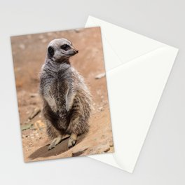 Meercat Stationery Cards