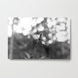black and white spider Metal Print