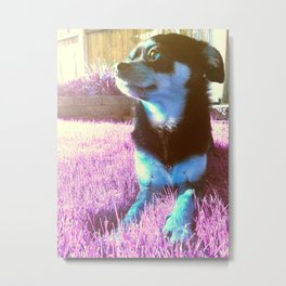 Blue dog on pink grass. Metal Print