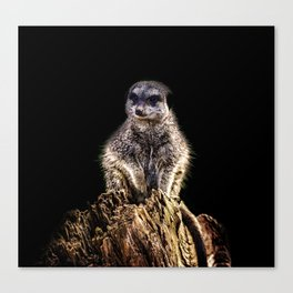 Meerkat Lookout Canvas Print