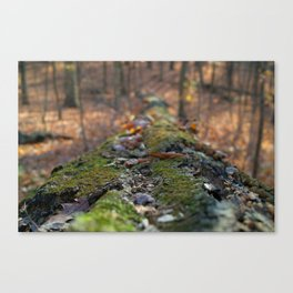 November leaves Canvas Print