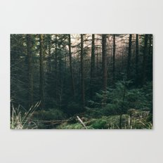 COLD PINES Canvas Print