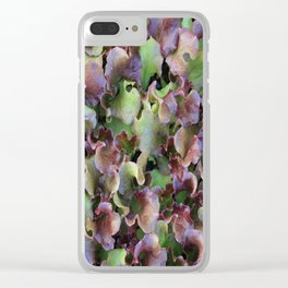 Red Leaf Lettuce Clear iPhone Case