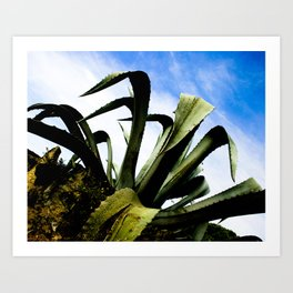 Large Giant Green Aloe Plant with Bright Blue Sky Art Print