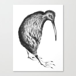 kiwi bird Canvas Print