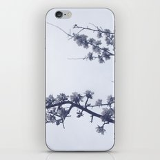 Apple blossoms iPhone & iPod Skin