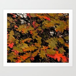 Scrambled Oaks Art Print