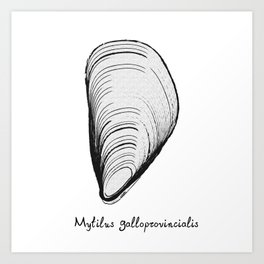 black or white mussel it's my life Art Print