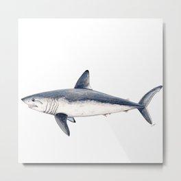 Porbeagle shark (Lamna nasus) Metal Print
