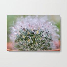 Dew Covered Cactus Metal Print
