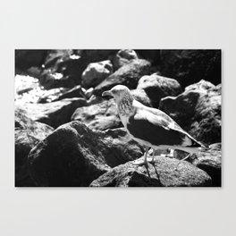 Seagull on Rocks Canvas Print