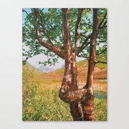 Strangely beautiful Alaskan Tree Canvas Print