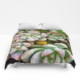 Dewy Delights Comforters