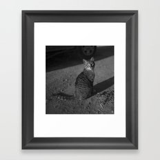 The Cats Collection (1) Framed Art Print