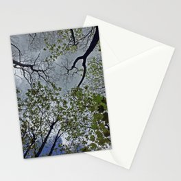 Tree canopy in the spring Stationery Cards